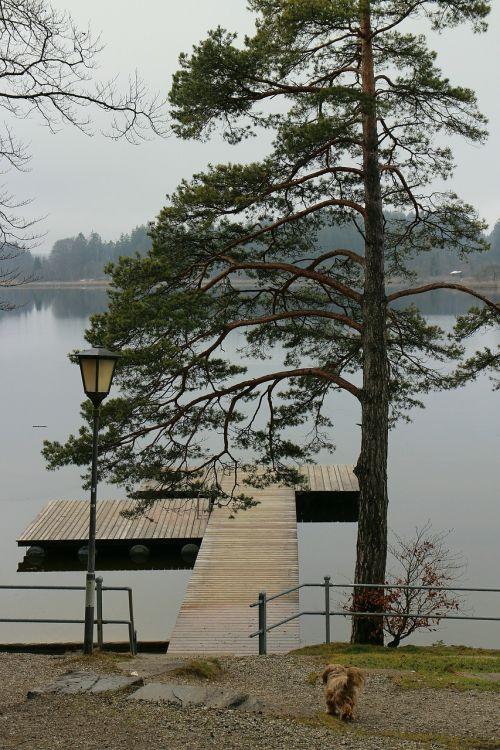 lake waters tree