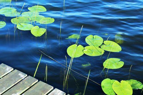 ežeras,vanduo,paviršius,tvenkinys,prieplauka,gamta,vairuoti,vasara,žalias,mėlynas,žalia mėlyna,mėlynas ežeras,mėlynas vanduo,atsigavimas,atsipalaidavimas,makro,vandens lelija,bankas,frisch,banga,skystas,išsipūsti