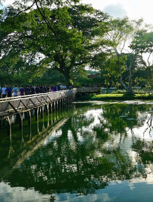 lake bridge wooden