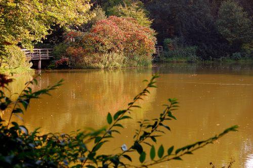 lake forest autumn