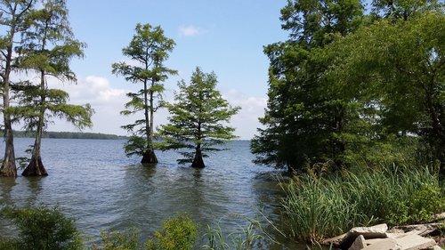 lake  trees  serene