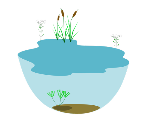 lake  ecosystem  ecosystems water water