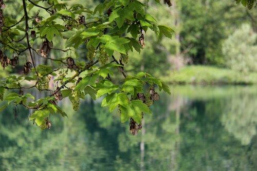 lake  reflection  water
