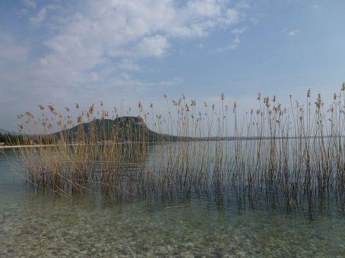 lake bank idyll