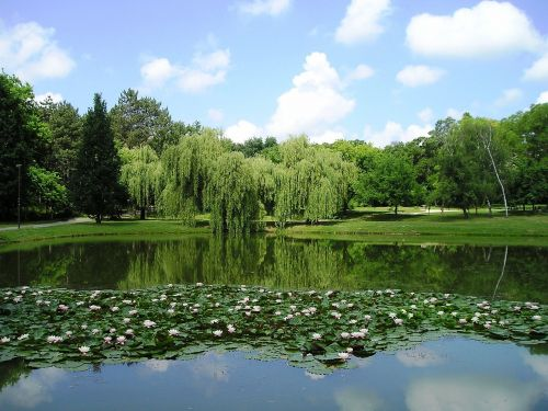 lake,frog,nature,hungary,landscape,rural landscape,water,hungarian landscape,trees,forest,tourist attractions