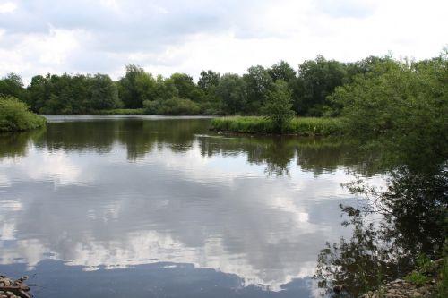 lake plant landscape
