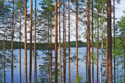 lake view pine