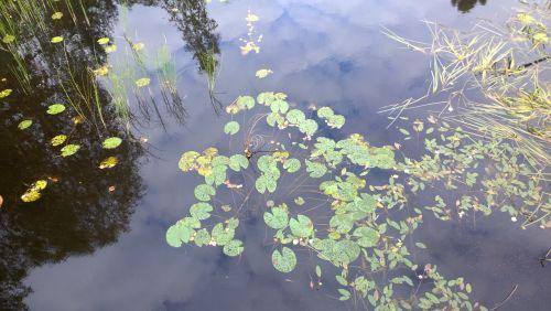 lake reflection calm