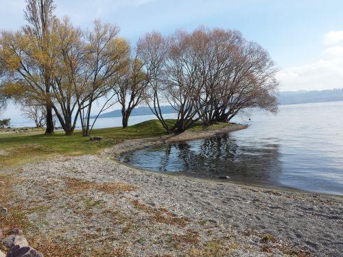 lake tree ca