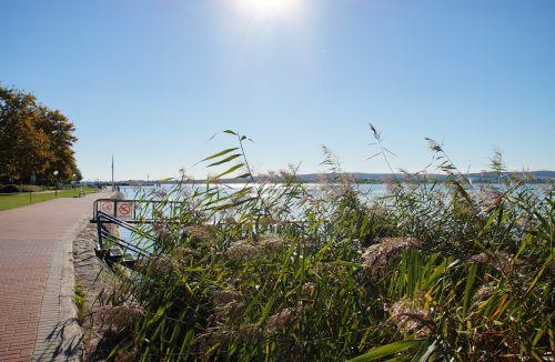 lake balaton reeds