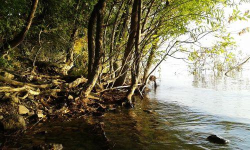 Balaton ežeras,ežeras,ežeras,vanduo,kranto,miškas,mediena,medžiai,gamta,vasara,tihany