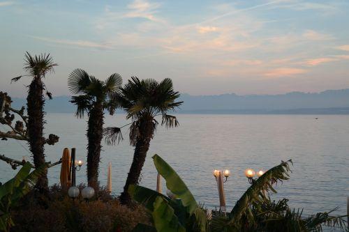 lake constance meersburg palm trees