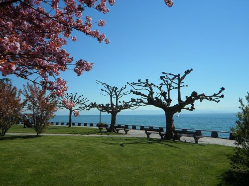 lake constance in the spring spring