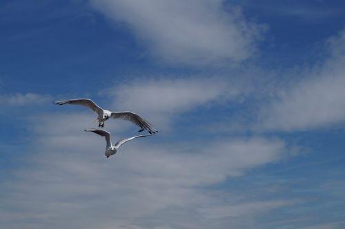 lake lucerne region sgv gulls