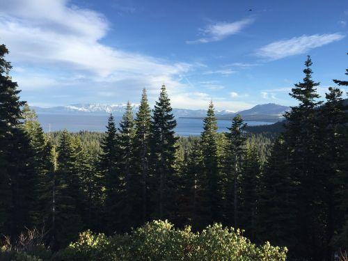 lake tahoe trees mountain