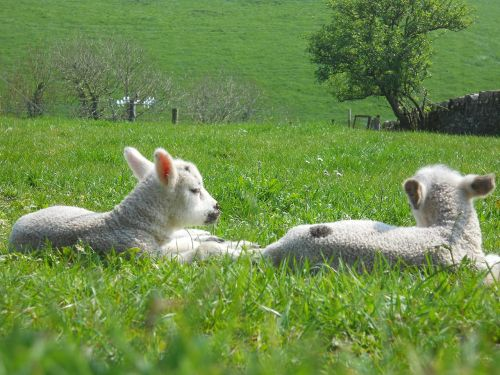 lamb spring easter