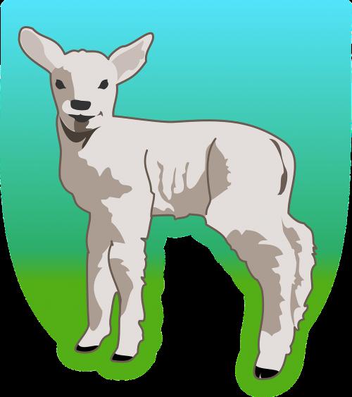 lamb sheep livestock