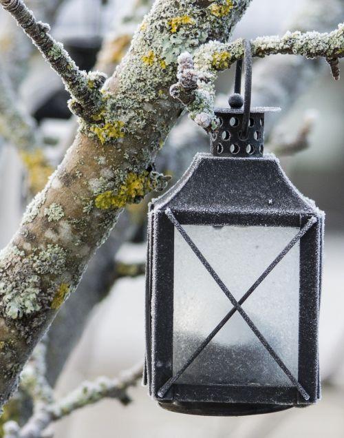 lamp apple tree frost