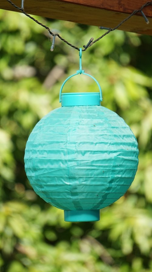 lampion  nature  summer