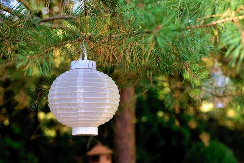 lampion  tree  garden