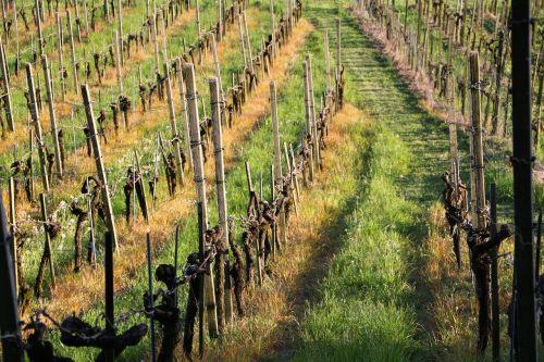 land management vines vines stock