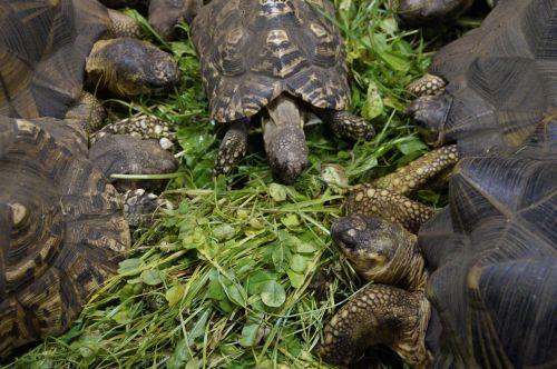 land turtles turtles eat