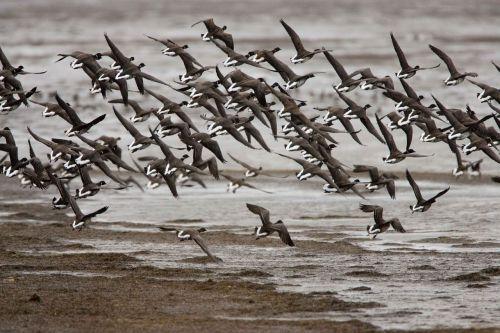 landing prepare flock