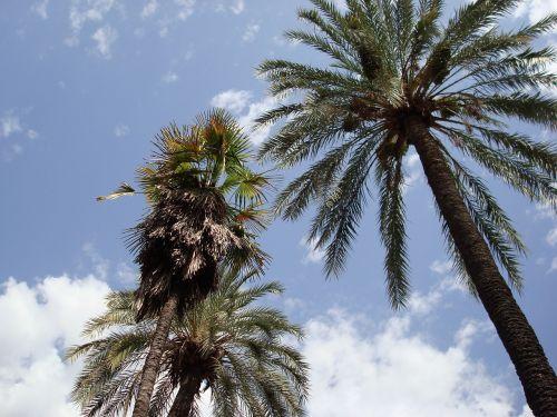 landscape palms nature