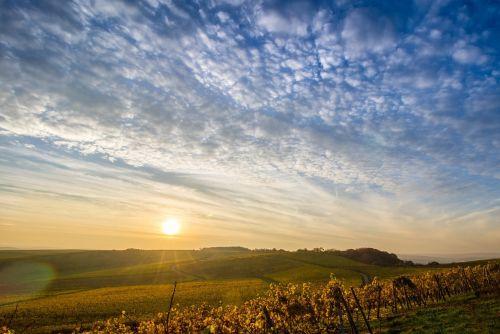landscape sky vineyards