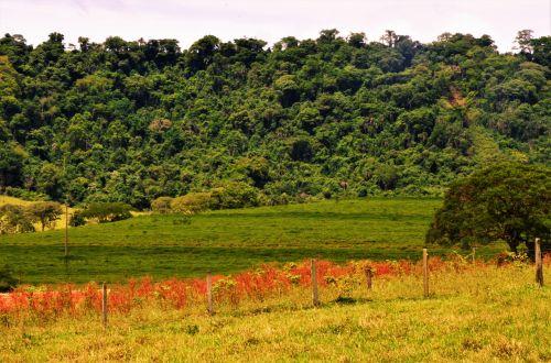 landscape green serrated