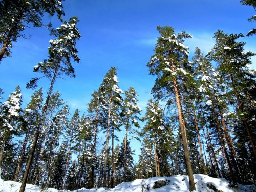 landscape finnish sky