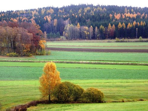 landscape herbstimpression in neualbenreuth