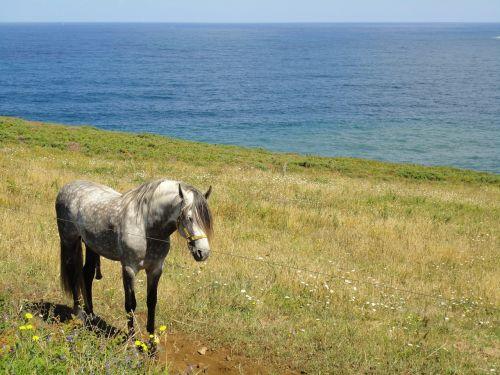 colt landscape animals