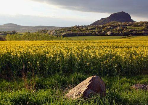 landscape spring rape