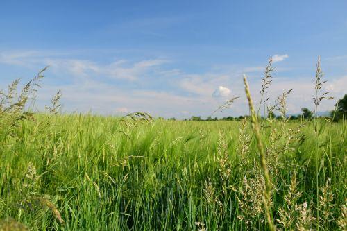 landscape field bluegrass
