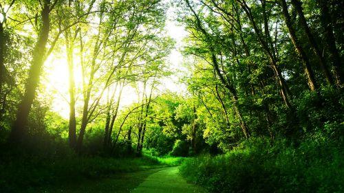 kraštovaizdis,saulė,medžiai,miškas,kelias,trasa,gamta,ramus,ramybė,ramybė