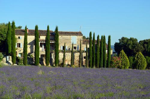 landscape provence lavender