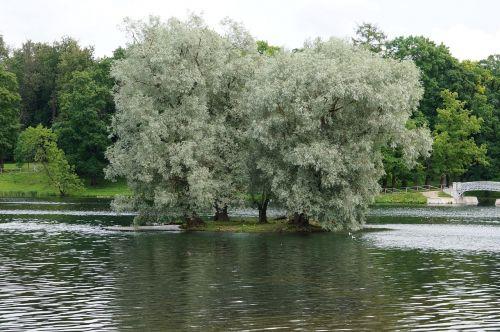 landscape silver willow lake