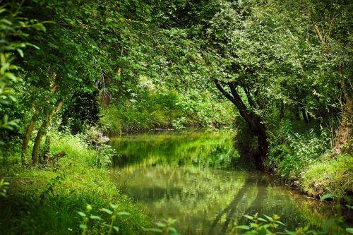 landscape bach nature