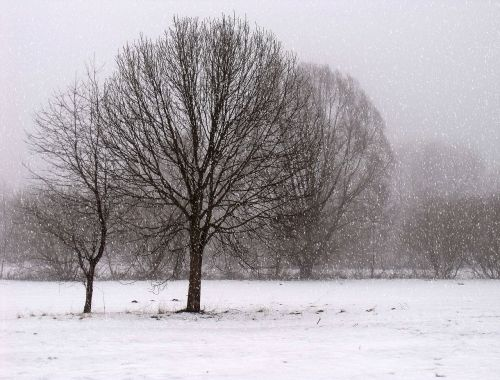 landscape winter cold