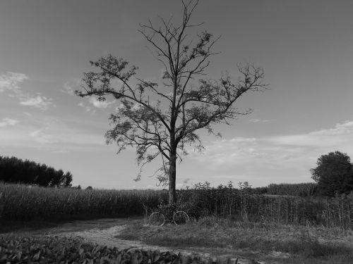 landscape white nero