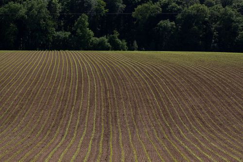 landscape arable spring