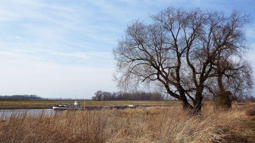 landscape tree barge