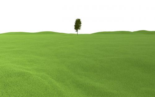 landscape tree grass