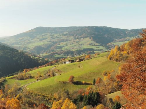 landscape nature fall