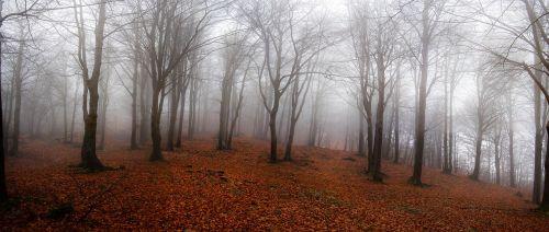landscape forest autumn
