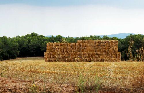 landscape summer haystack