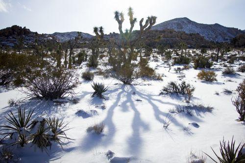 kraštovaizdis,vaizdingas,žiema,sniegas,kaktusas,Joshua medžio nacionalinis parkas,Kalifornija,lauke,vakaruose,dykuma,sausas,gamta,dykuma,kalnai,šešėliai