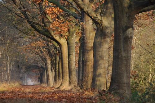 landscape plant forest