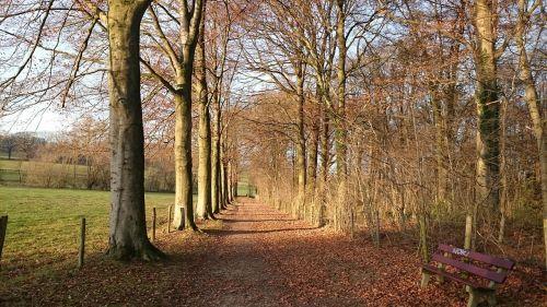 landscape nature south limburg